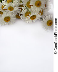 Paper banner with flower chamomile, a white