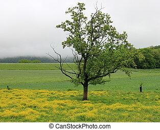 Lone tree in a field of flowers - Single tree standing in a...