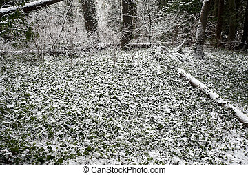 Forest in winter, covered by the snow