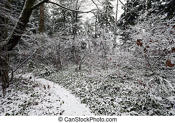 Forest in winter covered by the snow