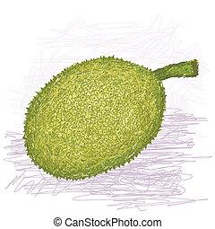 breadfruit rough-skinned variety