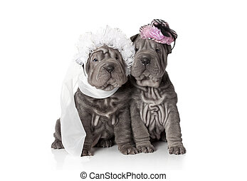 Wedding - Two sharpei puppies dressed in wedding attire, on...