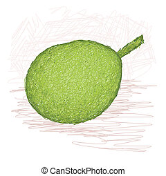 breadfruit smooth-skinned variety - illustration of whole...