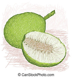 breadfruit smooth-skinned half - illustration of whole and...