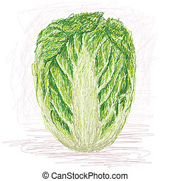 napa cabbage - illustration of fresh whole napa cabbage,...