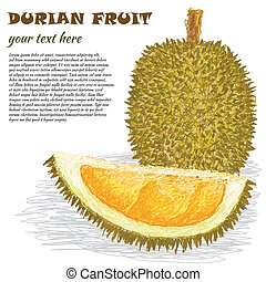 durian fruit - closeup illustration of ripe whole and half...