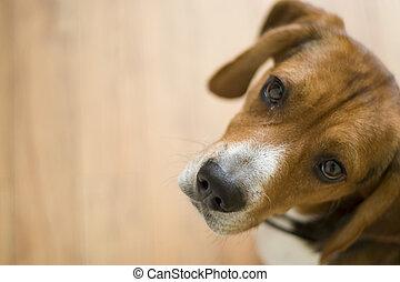 Cute Beagle Dog
