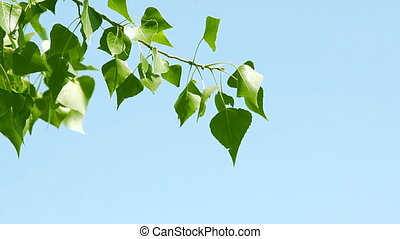 Branch with green leaves over blue sky