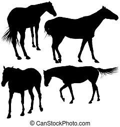caballos, Siluetas