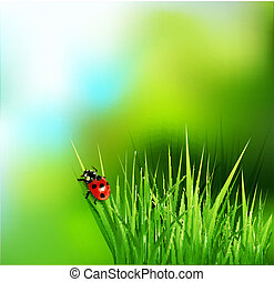 grass and ladybug - vector background with green grass and...