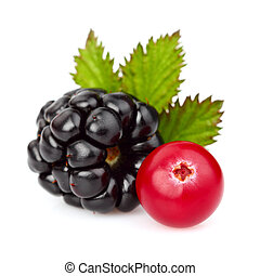Blackberry with cranberry in closeup