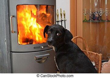 Hund beim Ofen - Hund geniesst die Waerme vorm Steinofen