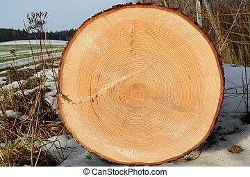 Baumstamm mit Jahresringen - gefaellter Baumstamm auf...