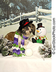Shih Tzu and Snowman - A little shih tzu dog poses as a...