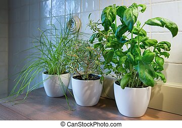 beautiful green plant  - Fresh green herbs in a pot