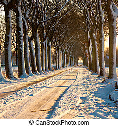 Beatiful Winter Day - Snow on a Lane in Sunny Winter...