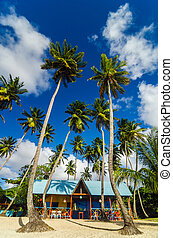 Beach Shack and Palms - Colorful beach shack and palm trees...