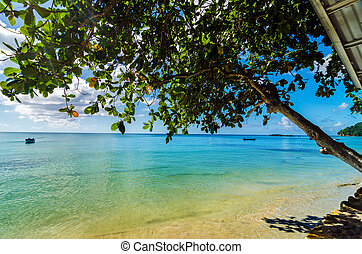 Tree Over Caribbean Sea - Tree extending out over the...