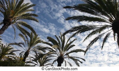 Palm tree drive San Diego - Slow drive under palm trees and...