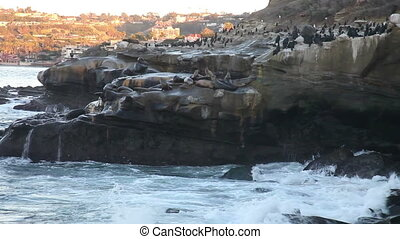 La Jolla cove, San Diego - La Jolla cove with wild life, sea...