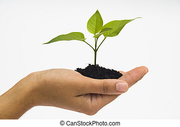 Hand holding seedling - Hand holding young plant against...