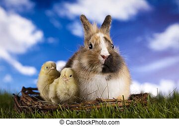Easter animal - Easter- the Sunday in March or April when...