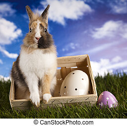 Easter bunny - Easter- the Sunday in March or April when...