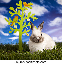 Rabbit and spring time - Easter- the Sunday in March or...
