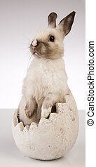 A rabbit isolated white background