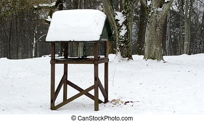 bird feeder winter snow - big wooden bird feeder in park and...
