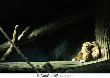In Captivity III - A primate in a dark zoo enclosure,...