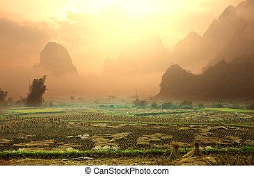Fields in Vietnam - field in Vietnam