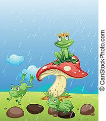 rãs, tocando, chuva
