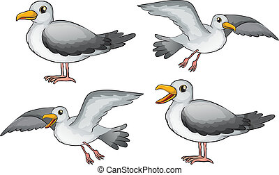 Four birds - Illustration of four birds on a white...