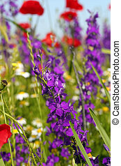 colorful wild flowers spring scene