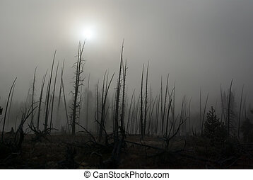 Gloom - A fog hanging over the burnt trees of Yellowstone