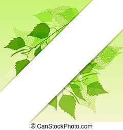 fresco, verde, hojas, Plano de fondo, Abedul