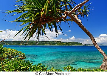 Beautiful subtropical Okinawa - Summer sky and the green of...