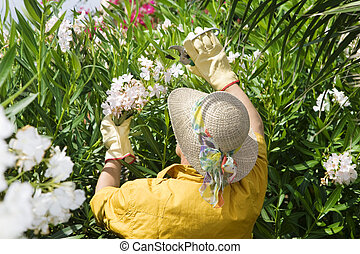 gardening - Rear view of senior woman pruning flowers in...
