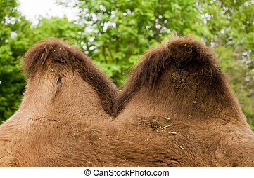 Camel Hump - Detail view of Camel Hump