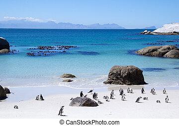 Pingüinos, sur, áfrica