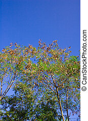 Deciduous trees change the seasonal - Change the seasonal...