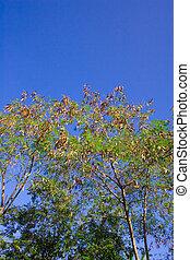 Deciduous trees change the seasonal - Change the seasonal...