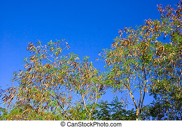 Deciduous trees change the seasonal2 - Change the seasonal...