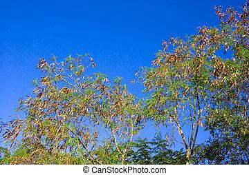Deciduous trees change the seasonal2 - Change the seasonal...