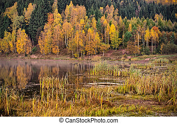 Pond during the autumn