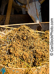 Cow manure. - Manure from cattle excrement compost to reduce...