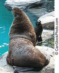 Seal and Sea Lion
