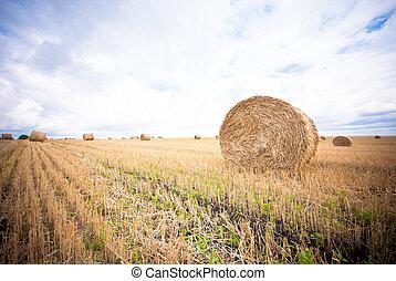 Hay Bale in the Field of Western Ukraine