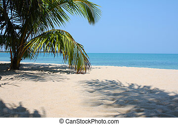 Palm Tree I - A green palm tree on a white sand beach in...